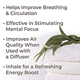 Plant Therapy Organic Eucalyptus Globulus Essential Oil 100% Pure, USDA Certified Organic, Undiluted, Natural Aromatherapy, Therapeutic Grade 30 mL