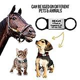 Slide On Pet Tag ID - Silent Custom Dog Tags - Dog