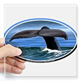 """CafePress - Whale Happy accident / Tail car boat Seadoo Oval Sticker - Square Bumper Sticker Car Decal, 3""""x3"""" (Small) or 5""""x5"""" (Capacious)"""