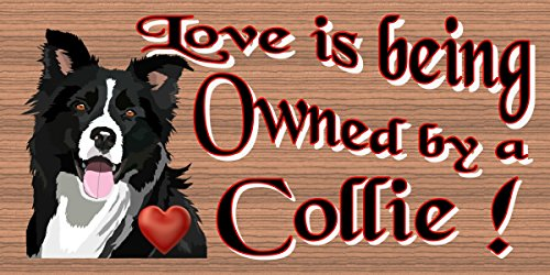 GiggleSticks Love is Being Owned by a Collie