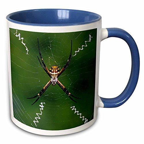 3dRose Danita Delimont - Spiders - Silver Argiope spider, Rio Grande Valley, (Spider Valley Plate)