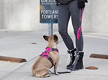 Comfort Walk Pro Harness Orange Sun M