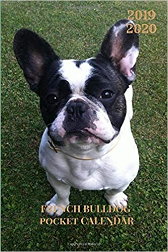 2019 2020 French Bulldog Pocket Calendar: Two Years Planner ...