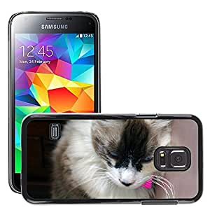 Etui Housse Coque de Protection Cover Rigide pour // M00133902 Gata Amigo Animal Animales Gatos // Samsung Galaxy S5 MINI SM-G800