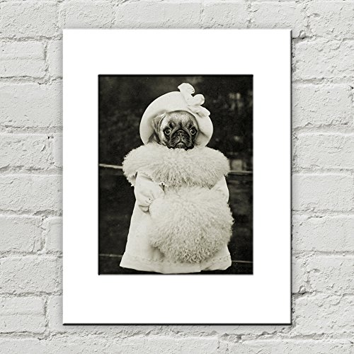 8 x 10 Pug Dog Matted Art Print, (Pictures Of Pugs In Costumes)