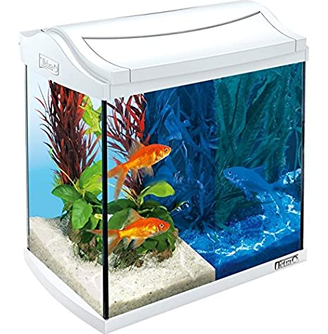 ACUARIOS ACUARIO TETRA AQUAART LED GOLDFISH 20 LT. COLOR BLANCO: Amazon.es: Hogar