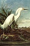 Laminated Audubon Snowy Egret Bird Art Print 24 x 36in