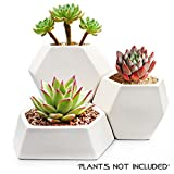 Modern Ceramic Geometric Planter ( 3 Pack-White) Hexagon Succulent Plant Pot/Cactus Flower Pot/Container For Sale