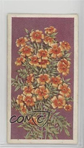 (Tagetes (Trading Card) 1939 Godfrey Phillips Annuals - Tobacco [Base] #44)