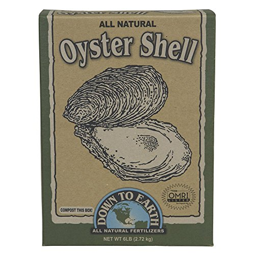 Shell Garden (Down to Earth 100523950 Oyster Shell Omri, White)