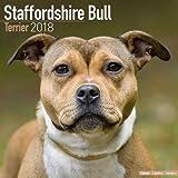 Staffordshire Bull Terrier Calendar - Dog Breed Calendars - 2017 - 2018 wall Calendars - 16 Month by Avonside