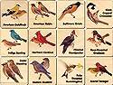 Peterson Backyard Bird Memory Tiles - Made in USAの商品画像