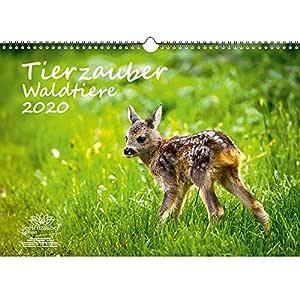 Tierzauber - Calendario 2020, diseño de animales del bosque ...