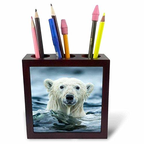 3dRose Danita Delimont - Bears - Canada, Repulse Bay, Polar Bear pokes its head above water. - 5 inch tile pen holder (ph_257551_1) -