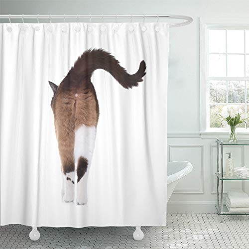 Emvency Shower Curtain Waterproof Adjustable Polyester Fabric Brown Behind Snowshoe Cat Walking Away View from Back Side Ass Rear Cute Animal 66 x 72 Inches Set with Hooks for Bathroom