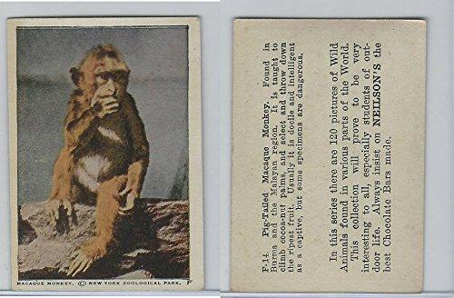 V67 Neilson's Chocolate, Wild Animals, 1930's, F14 Macaque Monkey