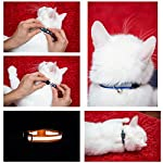 Upgraded Version - Reflective Cat Collar with Bell, Set of 6, Solid & Safe Collars for Cats, Nylon, Kitty Collars, Pet Collar, Breakaway Cat Collar, Free Replacement (6-Pack) 10