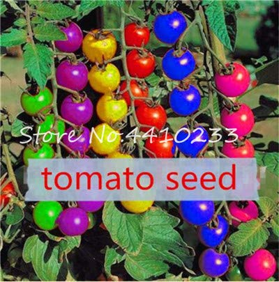 100 pcs Rainbow Dwarf Tomato Seeds Rare Tomato Organic Sweet Vegetable & Fruit Seeds Potted Plant for Home Garden Easy to Grow: d