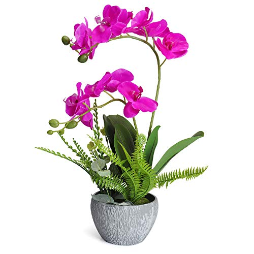 Phalaenopsis Flower Orchid (RERXN Artificial Flower Arrangement Silk Phalaenopsis Orchid in Bonsai for Fhome Decor (Fuchsia))