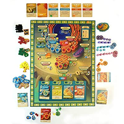 Cytosis: A Cell Biology Game | A Strategy Board Game with Accurate Science: Toys & Games