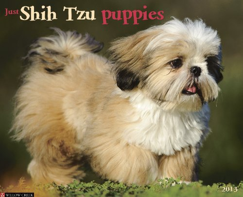 Shih Tzu Puppies 2013 Wall Calendar (Just (Willow ()
