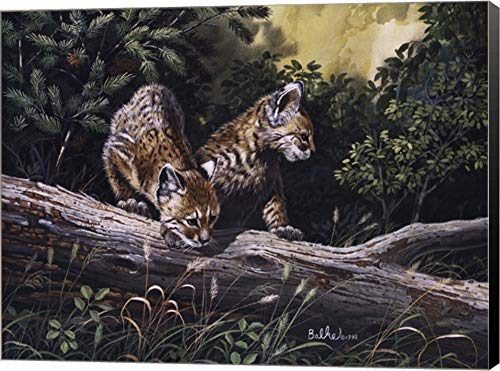 - Bobcat Kittens by Don Balke Canvas Art Wall Picture, Museum Wrapped with Black Sides, 16 x 12 inches
