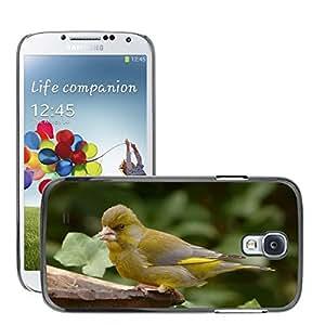 Print Motif Coque de protection Case Cover // M00125904 Pájaro verderón Primer Jardín // Samsung Galaxy S4 S IV SIV i9500