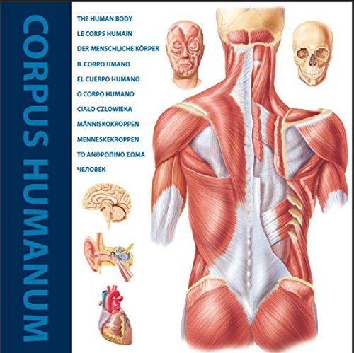 Read Online The Human Body PDF