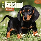 Dachshund Puppies 2015 Mini 7x7