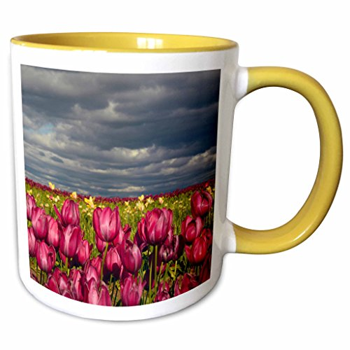 3dRose Danita Delimont - Michel Hersen - Flowers - Tulip Field, Tulip Festival, Woodburn, Oregon, USA - 11oz Two-Tone Yellow Mug - Outlet Woodburn Oregon