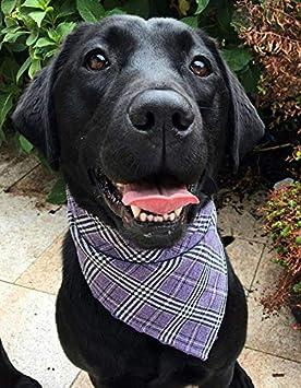 Handgemachtes Hunde Accessoire Dimples Hundehalstuch Glencheck lila Schottenkaro Hunde Besitzer Geschenk Halstuch f/ür kleine mittlere und Grosse Hunde Welpen und Katzen