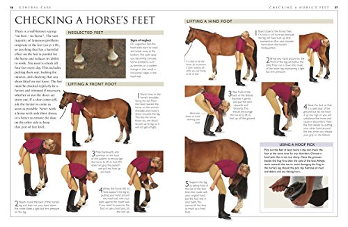 The 8 best horse care books
