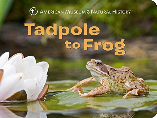 Tadpole to Frog (Science for Toddlers)