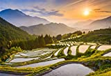 OFILA Rice Terrace Backdrop 7x5ft Countryside Landscape Photography Background Sunset Scenery Asian Agriculture Technology TV Program Report Rural Landscape Farmland Shoots Travel Video Studio Props