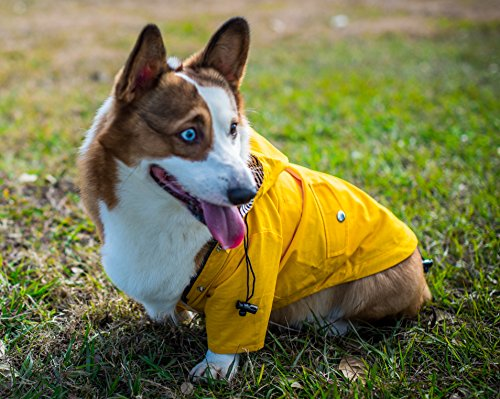 Yellow Zip Up Dog Raincoat with Reflective Buttons, Pockets, Rain/Water Resistant, Adjustable Drawstring, Removable Hood - Size XS to XXL Available - Stylish Premium Dog Raincoats by Ellie (M)