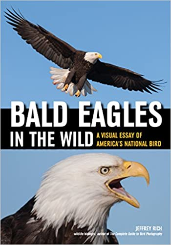 Amazon Bald Eagles In The Wild A Visual Essay Of Americas