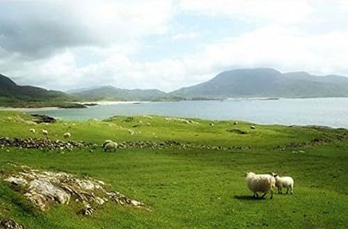 Amazon.com: Ireland Photography , Irish Landscape, Sheep