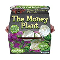 Dunecraft The Money Plant Science Kit