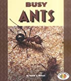 Busy Ants, Kristin L. Nelson, 0822537753