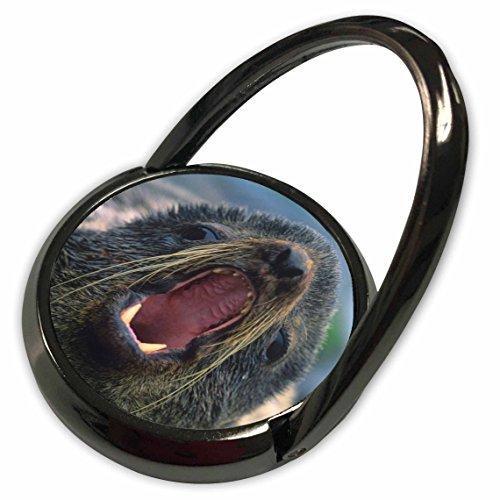 3dRose Danita Delimont - Seals - Northern Fur Seal, Callorhinus ursinus, California, USA - Phone Ring (phr_259037_1) - Northern Fur Seal