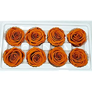OgisFlorist | 100% Real All Natural Premium Preserved Roses | No Water Needed | Perfect Alternative to Artificial & Dried Flowers for DIY Crafts, Decoration, Décor | 8 Medium Head | (Orange8PK) 73
