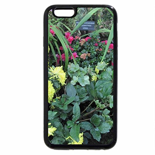 iPhone 6S / iPhone 6 Case (Black) We Color the World in Spring 29