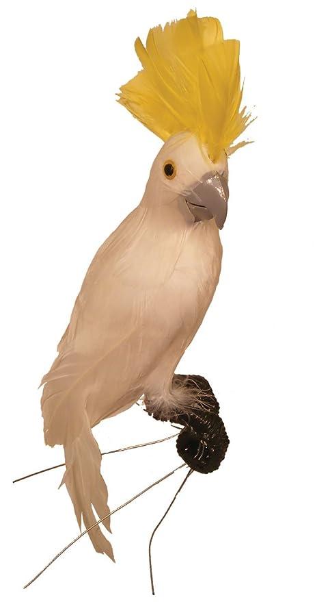 amazon com white feathered display cockatoo bird with vibrant