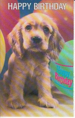 Amazon Com Unused Postcard Puppy Dog Happy Birthday Greetings