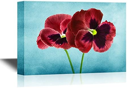 Pansy Flower Red Pansy Flowers