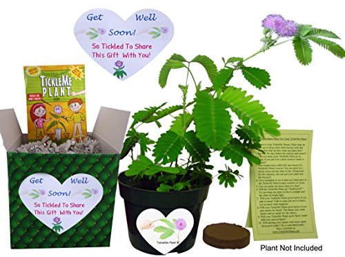 Labels Well (GET WELL GIFT PLANT - TickleMe Plant Gift Box Set - Grow the Plant that closes its leaves when you TICKLE it or blow it a KISS! It also grows)