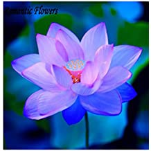 The Best Seller 10 Seeds / Bag, Deep Emerald Blue Water Lily Flower Bed Chinese Seeds, Hydroponic Plant Seeds