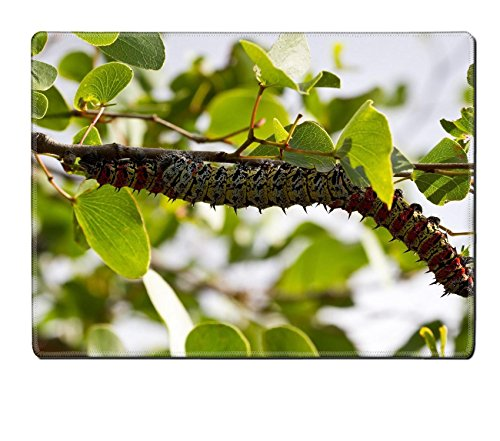 luxlady-placemat-mopane-worm-on-leaf-colourful-eat-hang-green-food-image-20989928-customized-art-hom
