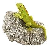 Top Collection Miniature Fairy Garden and Terrarium Iguana on Rock Statue Review