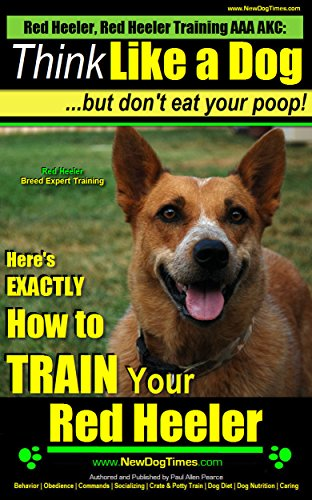 Red Heeler Red Heeler Training Aaa Akc Think Like A Dog But Don